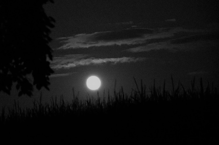 Supermoon over the cornfield